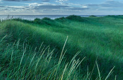 Cape Cod Grasses. Rolling grass on the shores of Cape Cod Stock Photos