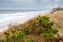 Cape Cod i November Arkivbild