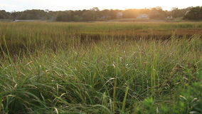 Cape Cod Marsh Late Afternoon stock video footage