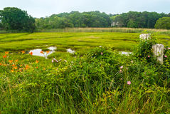 Cape Cod Meadow. A wetland near Centerville on Cape Cod in Massachusetts Royalty Free Stock Photos