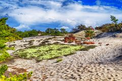 Cape Cod National Seashore Nature stock photography