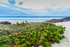 Cape Cod in November. Deserted beach in cloudy weather, Cape Cod, Massachusetts stock images