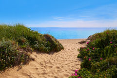 Cape Cod zatoczki Śledziowa plaża Massachusetts USA Zdjęcia Royalty Free