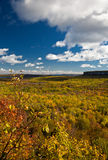 Cape Croker Cliff Autumn Fall Forest Trees landscape Stock Image