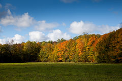 Cape Croker Woodside Autumn Fall Forest Trees Stock Photo