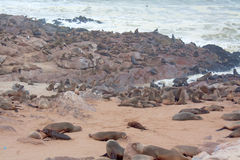 Cape Cross Seal Colony Royalty Free Stock Photography