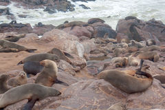 Cape Cross Seal Colony Royalty Free Stock Image