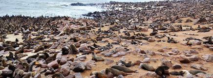 Cape Cross seal colony. Cape Cross under the name Cape Cross Seal Reserve. The reserve is the home of one of the largest colonies of Cape fur seals in the world Stock Photos