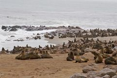 Cape Cross Seal. Cape Cross, Namibia, Africa stock photo