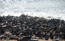 Cape Cross Seal Reserve. Skeleton Coast. Namibia. Cape Cross is a small headland in the South Atlantic in Skeleton Coast, western Namibia, on the C34 highway stock image