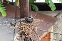 Cape Crow. stock photos