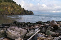 Cape Disappointment. Driftwood and Lone Pine In The Cove Stock Image