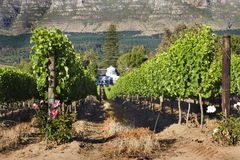 Cape Dutch homestead on a wine farm Royalty Free Stock Photo