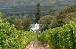 Cape Dutch style building at Groot Constantia, Cape Town, South Africa, with vineyard in  foreground and mountains in background. Cape Dutch style farm building stock images