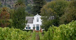 Cape Dutch style building at Groot Constantia, Cape Town, South Africa, with vineyard in  foreground and mountains in background. Cape Dutch style farm building royalty free stock photo