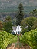 Cape Dutch style building at Groot Constantia, Cape Town, South Africa, with vineyard in  foreground and mountains in background. Cape Dutch style farm building royalty free stock image