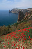Cape Fiolent. Field of red poppies. Stock Image