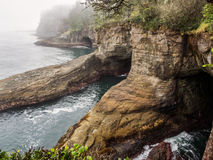 Cape Flattery in the fog. Cape Flattery on a foggy day in Olympic National Park, Washington royalty free stock image