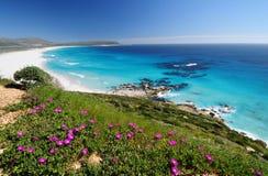 Cape floral vista. Springtime view with flowers along Noordhoek beach near Cape Town Stock Photos