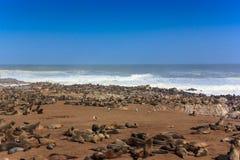Cape fur seals on the beach of Cape Cross. Cape fur seals on the beach. They lie and rest on beach of Cape cross. Rough atlantic ocean Namibia Africa stock photos