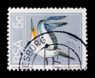 Cape Gannet Morus capensis, Definitives Flora and Fauna serie, circa 1973. MOSCOW, RUSSIA - OCTOBER 1, 2017: A stamp printed in South Africa shows Cape Gannet Stock Images