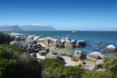 Cape of good hope reserve Royalty Free Stock Images