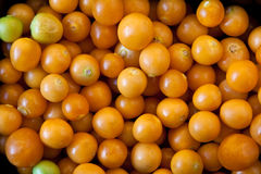 Cape gooseberries Royalty Free Stock Images