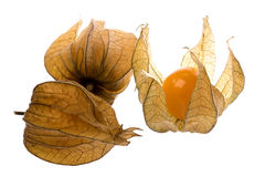 Cape Gooseberries Isolated Royalty Free Stock Photos