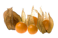 Cape Gooseberries Isolated Stock Photography