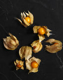 Cape Gooseberry Stock Images