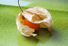 Cape Gooseberry fruit Stock Image