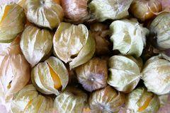 Cape gooseberry fruit benefit Stock Photo