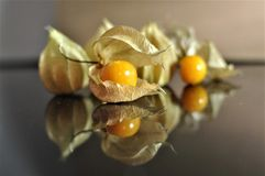 Cape gooseberry fruit. Organic food vegetable golden berry tasty royalty free stock photography