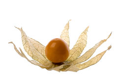 Cape Gooseberry Isolated Royalty Free Stock Images