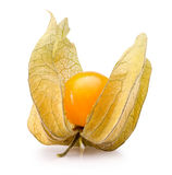 Cape gooseberry isolated on the white background Stock Image