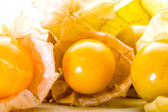 Cape gooseberry, Physalis fruits balls Stock Photos