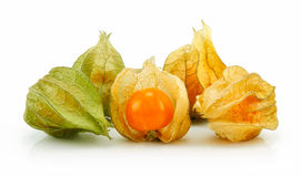 Cape Gooseberry (Physalis) Isolated Stock Images