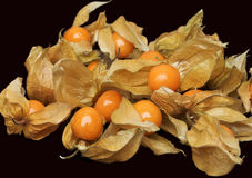 Cape gooseberry (physalis) Royalty Free Stock Photography