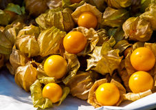 Cape gooseberry or Physalis peruviana L. Stock Images