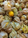 Cape Gooseberry & x28;Physalis peruviana& x29; Stock Photos