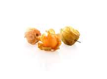 Cape gooseberry (physalis) on white Royalty Free Stock Photo