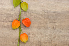 Cape gooseberry Royalty Free Stock Photos