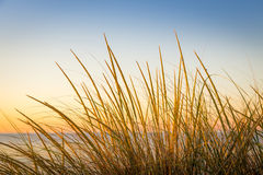 Cape Grass Royalty Free Stock Images