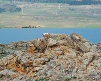 Cape hadarta Stock Image
