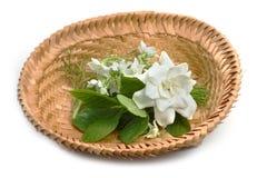 Cape Jasmine, Gardenia and Vallaris glabra flower royalty free stock images