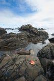 Cape Jervis Shoreline