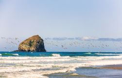 Cape Kiwanda Beach surf fishing. A flock of seagulls fly above the surf on the beach at Pacific City on the Oregon Coast. Haystack rock sits in the background Stock Photos