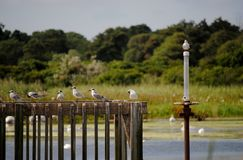 Cape May Bird sanctuary Stock Photo