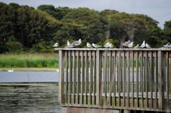 Cape May Bird sanctuary Royalty Free Stock Image