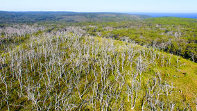 Cape Otway Nationa Park, Australia. Aerial view Royalty Free Stock Image